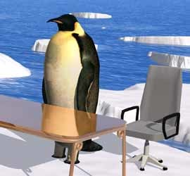 featured270_pinguin_dt_10093206